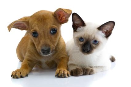 hayvanlar iletişim